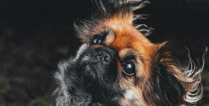 Hudba nás môže upokojiť a veselé melódie či pozitívne texty pesničiek nás môžu sprevádzať náročným životným štýlom. Vieš si predstaviť, že na hudbu rovnako reagujú aj naše psy? Toto sa zistilo pri výskumoch: