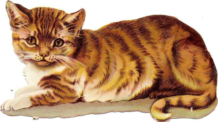 Oblaten Glanzbild scrap die cut chromo rote Katze cat 12,5cm chat ginger chaton