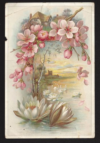 Victorian Water Lilies Postcard