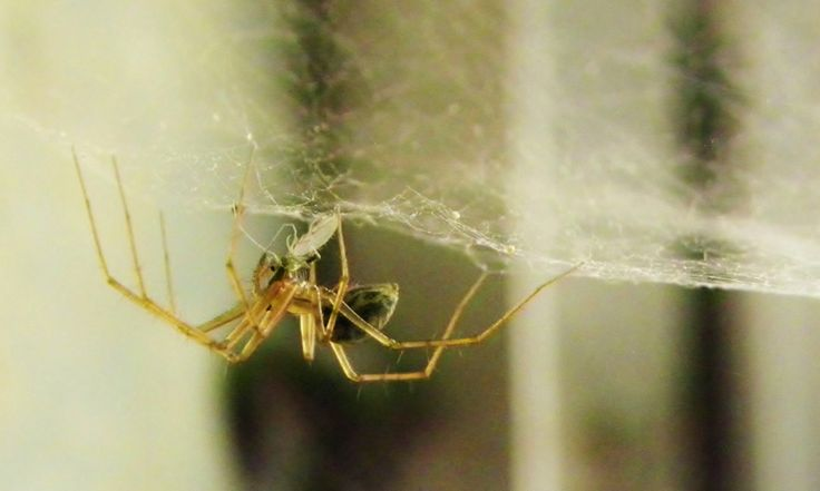 Hoera! Op deze manier houd je spinnen uit je huis