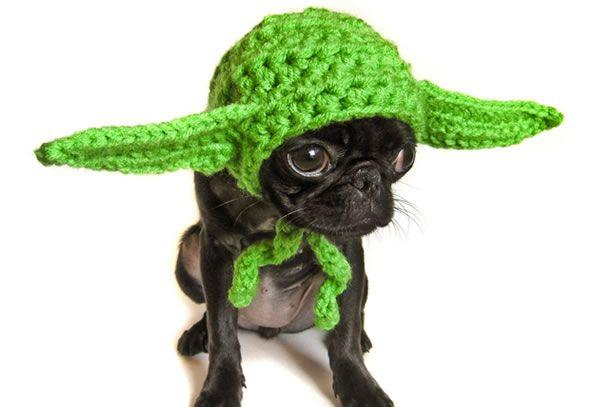 Cappellino Yoda per cani. E qui non c'è proprio niente da ridere!
