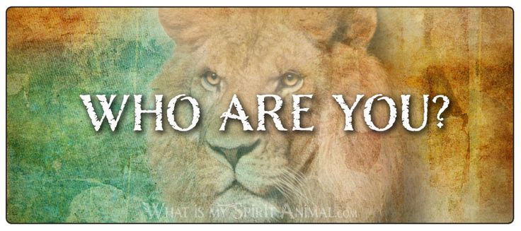 Take my Spirit Animal Quiz & connect with your animal spirit guide, today! This Spirit Animal Quiz can help you understand your life's purpose and path!