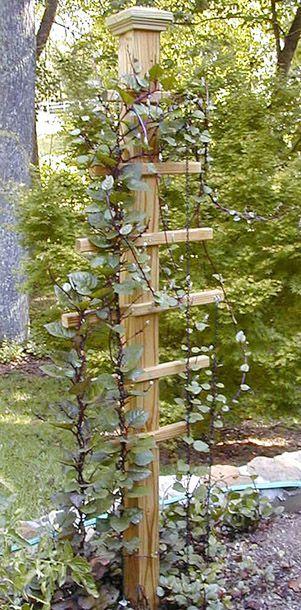Für die Clematis in der Gartenecke