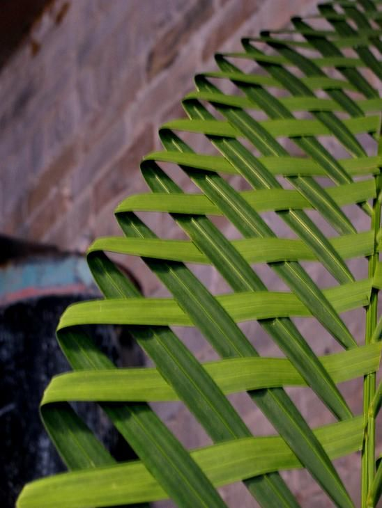 I stepped into the shop the other day and stopped dead in my tracks to stare at the woven Palm Leaves that Molly made. I stood there so long...