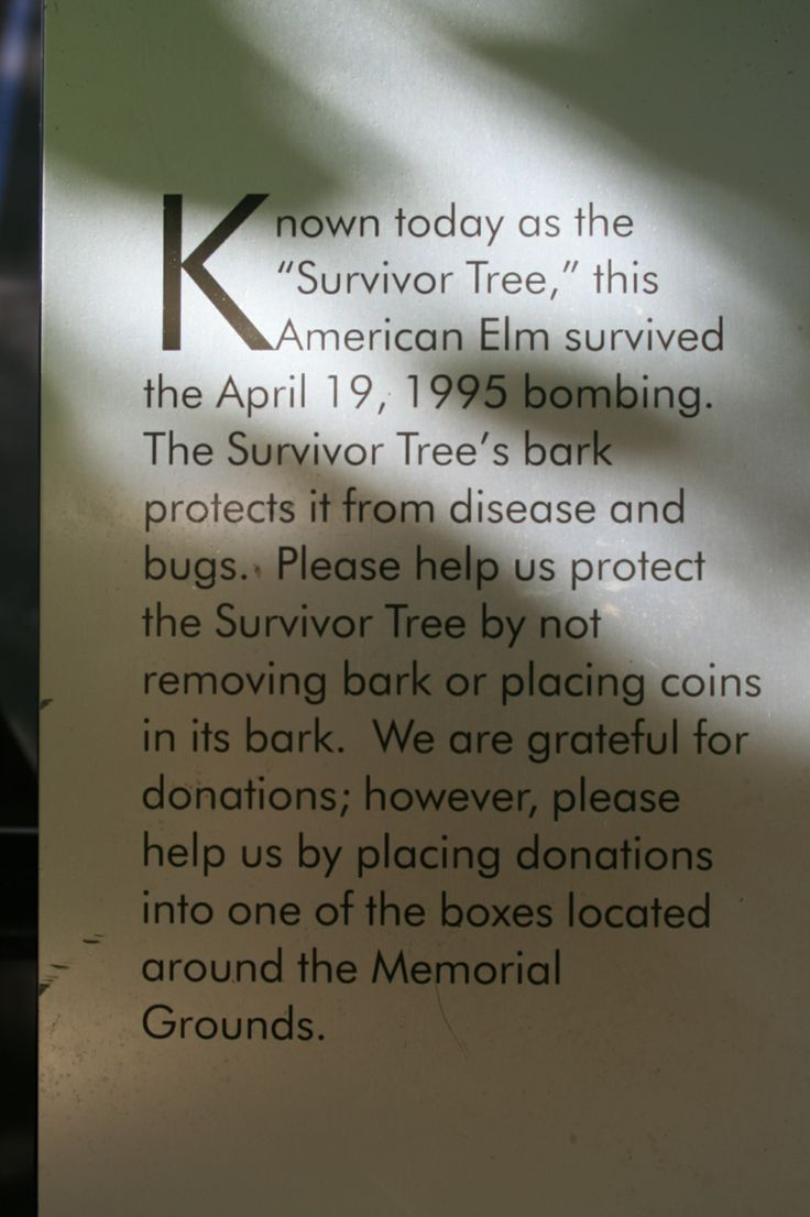 The Survivor Tree, Oklahoma City Bombing Memorial, Oklahoma City, OK Photos by Clover.