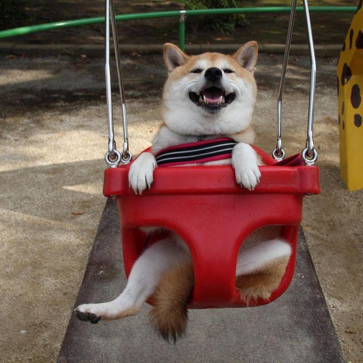 He S Going To Bake Something Amazing Dog Tumblr