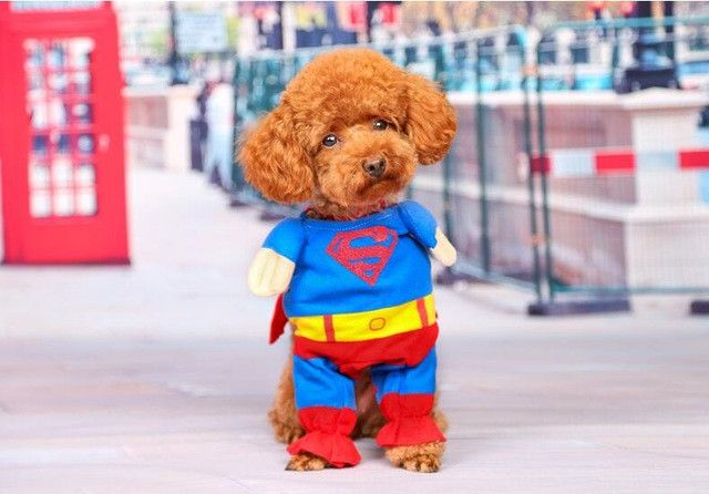 Funny Super Man Dog Clothes Puppy Cloak Red Blue Hero Pet Cosplay Clothing Cat T-shirt Kitten Summer Suit