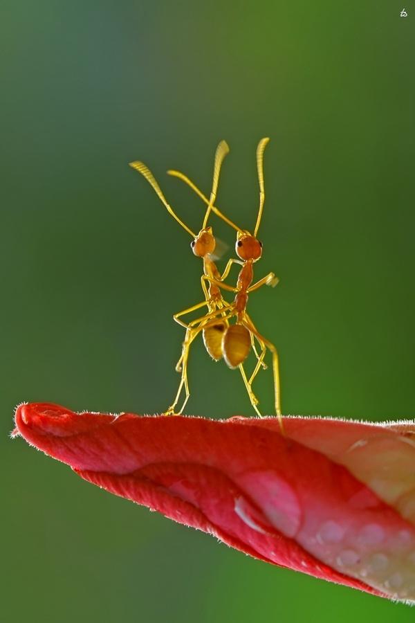 ღღ Amazing shot!!! ~~~ Dancing on the flower by Teguh Santosa