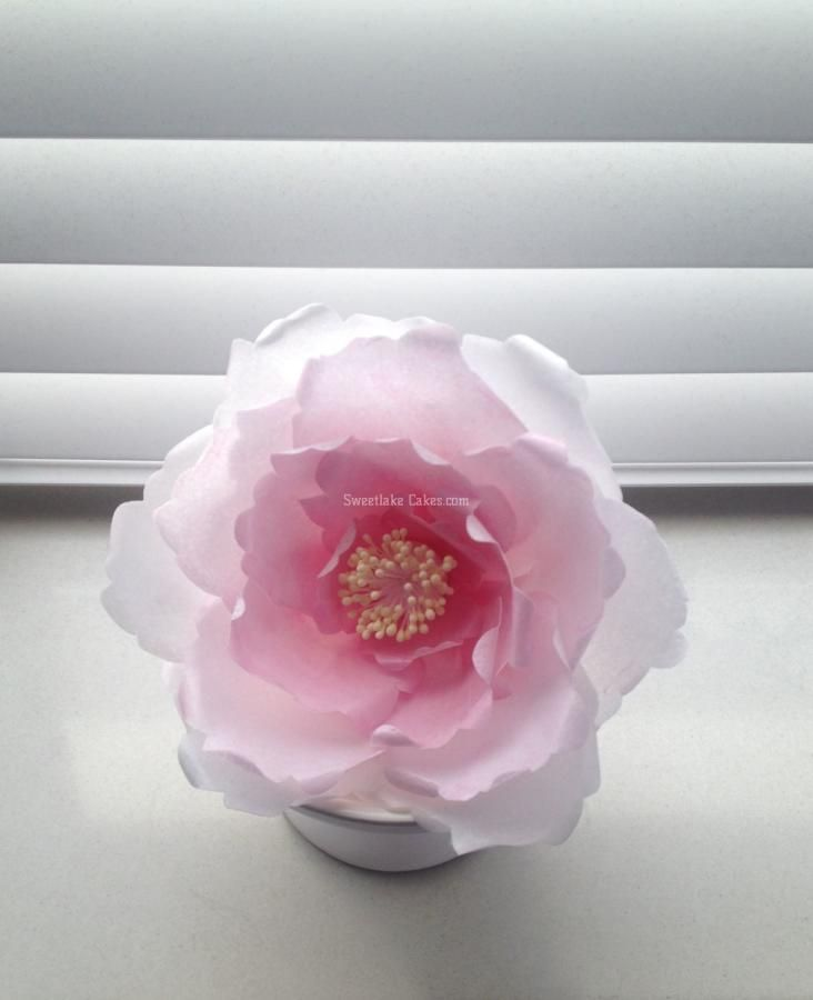 Wafer paper flowers sugar flowers pinterest beautiful flower wafer paper flowers sugar flowers pinterest beautiful flower and cakes mightylinksfo