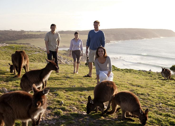 Kangaroo Island, South Australia - one of 15 unique Oz experiences: www.ytravelblog.com/australia-experiences-off-beaten-path
