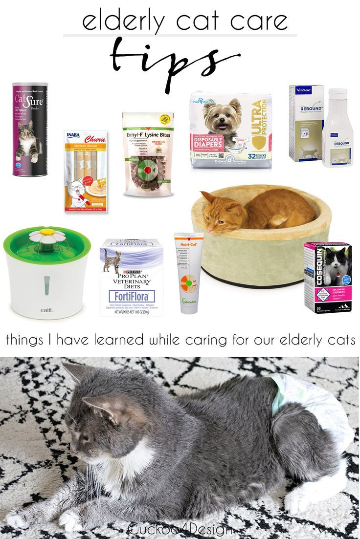 My Elderly Cat Care Tips Cuckoo4design In 2020 Cat Care Cat Care Tips Old Cats
