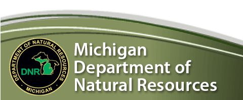 Attracting Frogs & Toads to your garden  DNR - Department of Natural Resources | DNR
