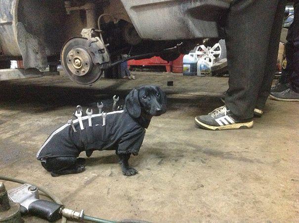 HUMOUR - Un adorable assistant-mécanicien !