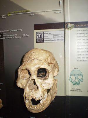 """Bwana joen kynästä: """"2,8 miljoonaa vuotta"""" vanha kallo askarruttaa tut..."""