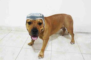 Gorros para tu mascota   Fulares Portabebes Kangutingo  http://www.kangutingo.com/2016/09/gorros-para-tu-mascota.html  consigue tu #gorrotejido a #crochet #craft #hermosoregalo #can #caninos #dog #disfraz #gym #ranarene #rana #sapito