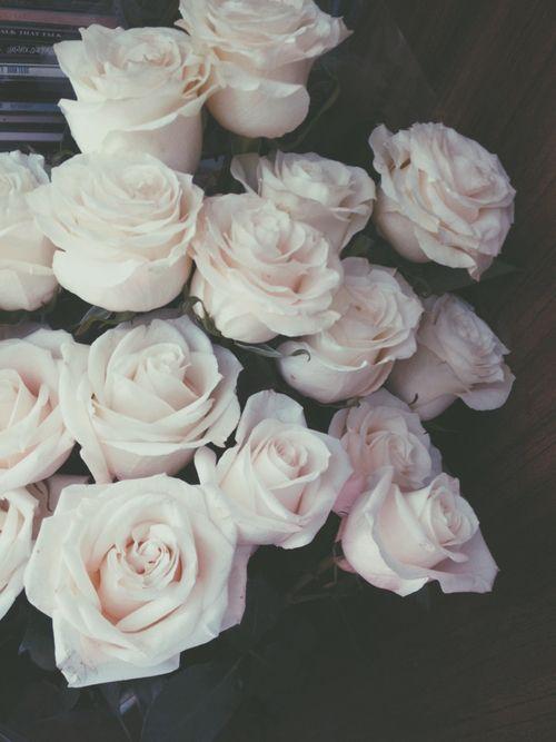 grafika rose, flowers, and white
