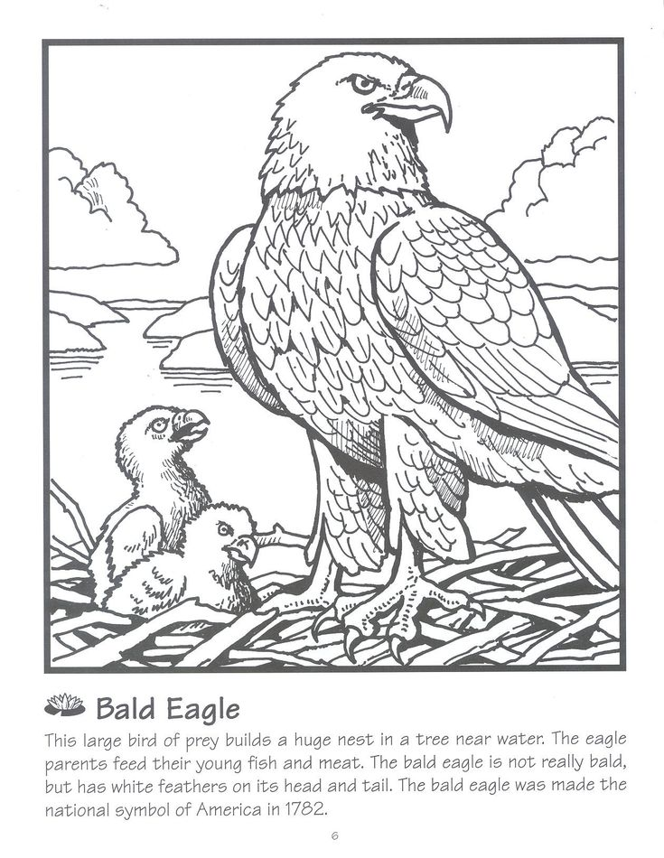 72 best Eagle Crafts / Activities for Kids images on