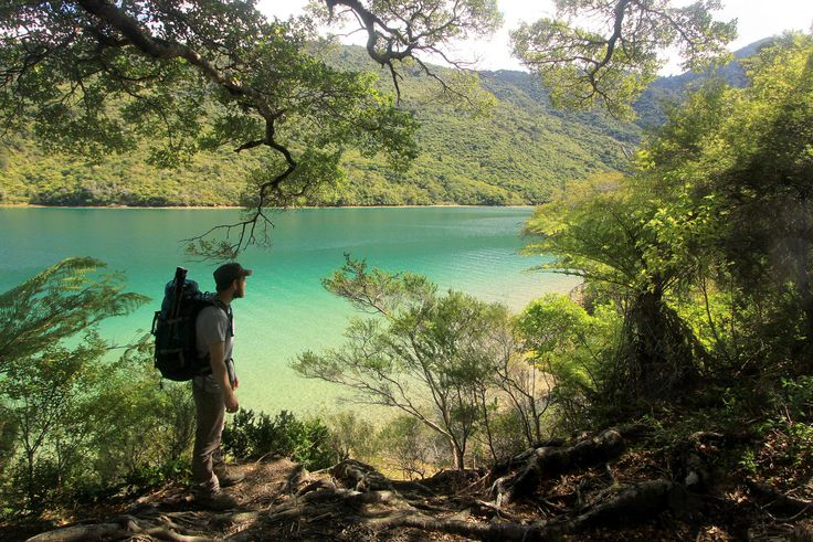 """Queen Charlotte Track - Tramping the Queen Charlotte Track in the Marlborough Sounds, South Island, New Zealand. <a href=""""http://www.robertdowniephotography.com"""">www.robertdowniephotography.com</a> Love Life, Love Photography"""