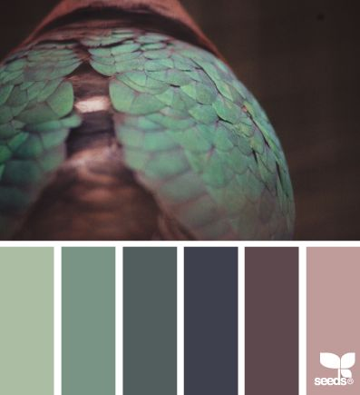 feathered hues | design seeds
