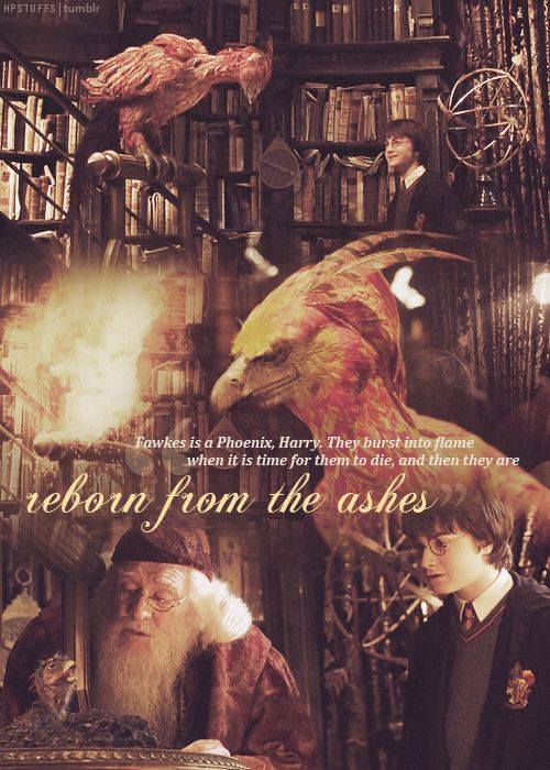 """Fawkes is a Phoenix, Harry. They burst into flame when it is time for them to die, and then they are reborn from the ashes."""