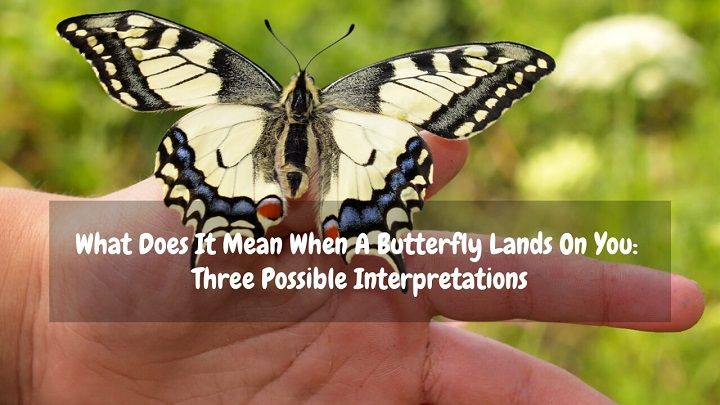 What Does It Mean When A Butterfly Lands On You: Three