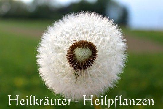 Heilkräuter - Heilpflanzen