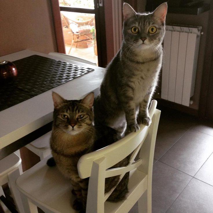 Just talk about eat...  #sweetcat #catsofinstagram #micetticarini #micetta #micettidolci #houseanimal #lovingcat #catlovers #catsofinstagram  #catloversworld #catloverscatoftheday #cat