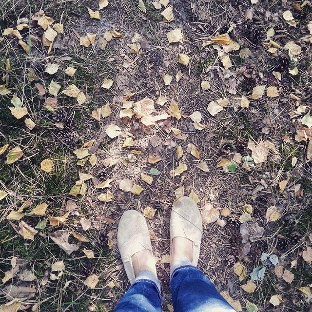 Jesień się zbliża. Fall is coming. #las #forest #jesień #fall #autumn #liście #leaves