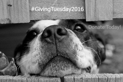 Giving Tuesday is a global day of giving fueled by people who want to make the holidays better for those in need. Donate to SAFE animal shelter today!