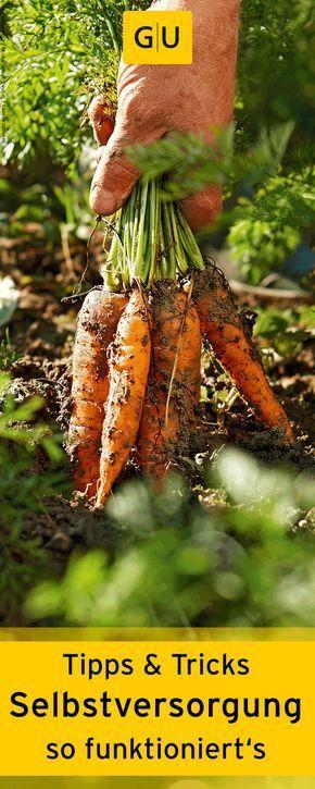 Obst und Gemüse selber anbauen. Wir verraten euch Tipps & Tricks für die Selbstversorgung. ⎜GU