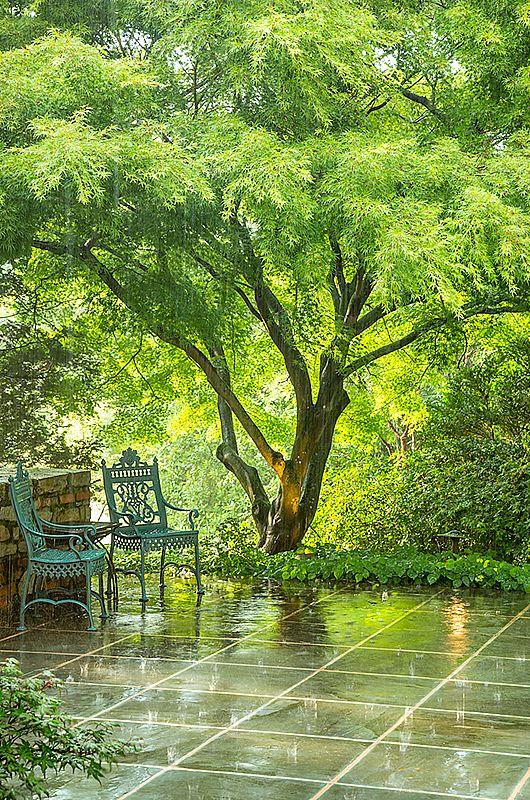 """2e Prix catégorie Jardin : Roger Foley, Sun Shower. Ruxton, Maryland, USA. """"Je photographiais le jardin un magnifique matin de juin quand j'ai ressenti de légères frappes à la main. Au début, je pensais qu'il s'agissait d'un oiseau en colère, mais ensuite je me suis aperçu de la présence d'un petit nuage d'orage dans le ciel bleu vif. Je suis allé à la maison pour garder l'appareil photo au sec, puis je suis retourné à la porte pour voir les larges gouttes de pluie frapper la terrasse et ..."""