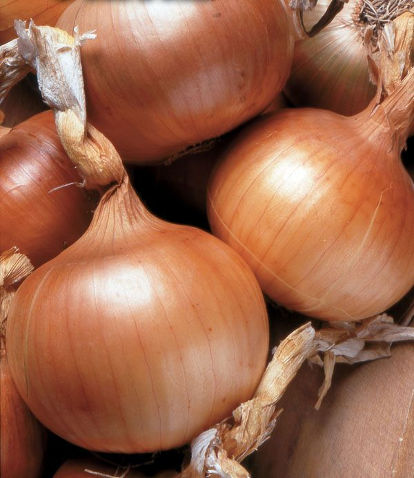 How to Grow Onions: Varieties for Every Region - Organic Gardening - MOTHER EARTH NEWS