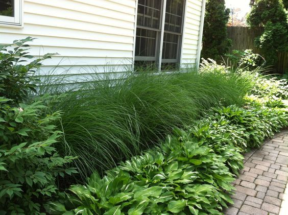 Easy landscaping for the lazy gardener, ornamental grass and hosta. comes back every year!