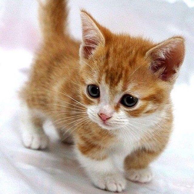 its cute