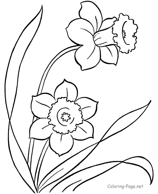 Flower coloring pages - Flowers to color