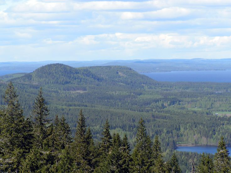 Koli is one of Finland's best known national landscapes. Though the area is small it is a treasure chest when it comes to natural features: rare geological features, a versatile array of animal species and an abundance of plant species.