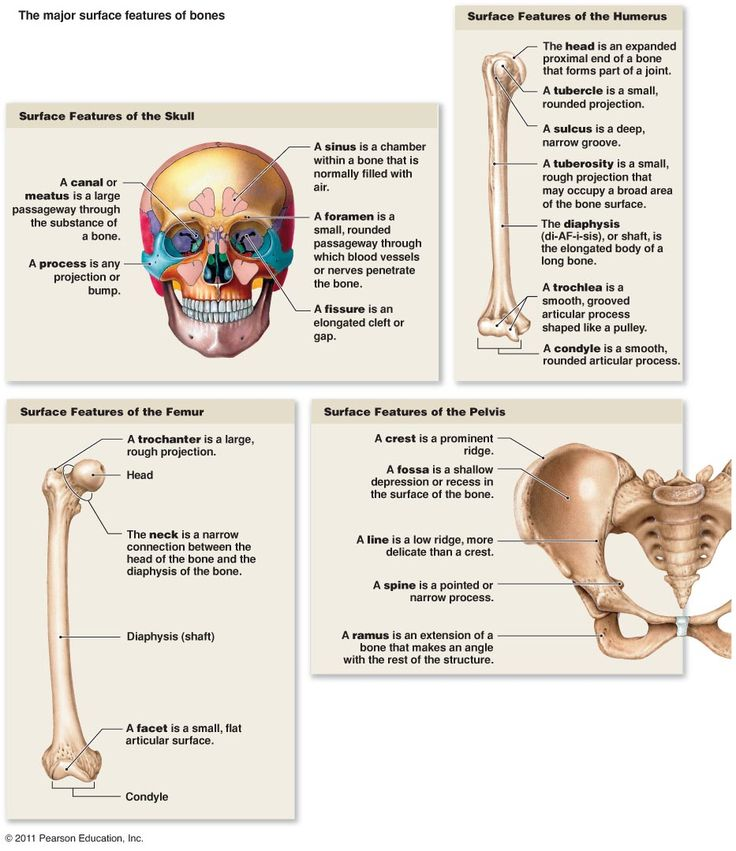 53 best Anatomy - Appendicular Skeletal System images on Pinterest ...