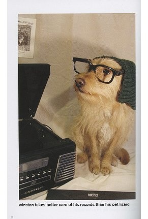 hipster puppy