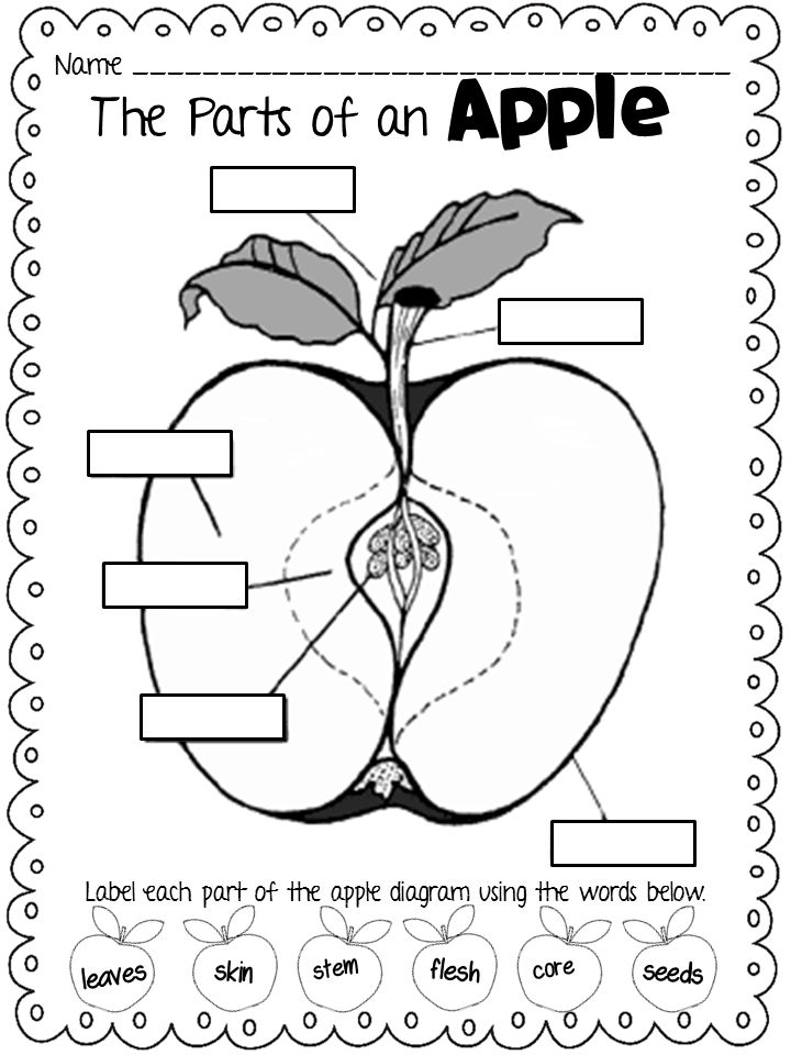 apple diagram for preschool