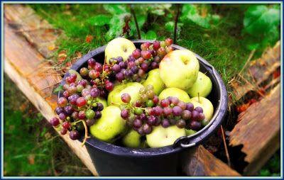 Γη και Ελευθερία.: Ώριμα φρούτα.