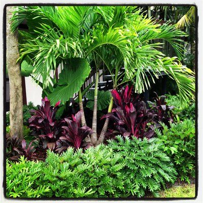 Tropical landscape | Yelp