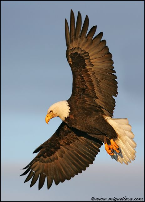 "War Eagles - ""I will say to Jehovah: ""You are my refuge and my stronghold. My God in whom I will trust...with his pinions he will block approach to you, and under his wings you will take refuge. His trueness will be a large shield and bulwark."" Psalm 91:2,4 The eagle represents wisdom and far-sightedness in the Bible."