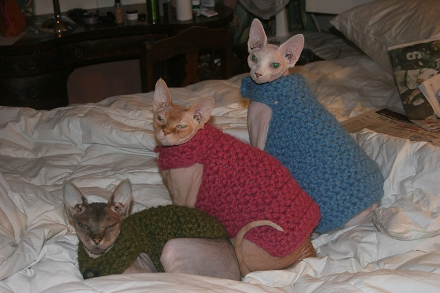 Hairless Cat Family...... I like the one in green!!!