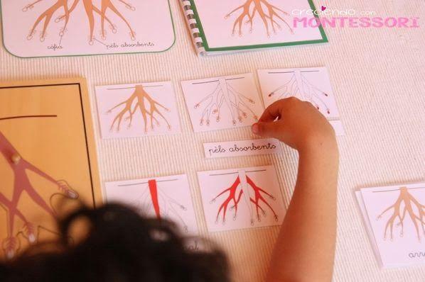 Botánica Montessori – La Raíz- Imprimibles Gratis