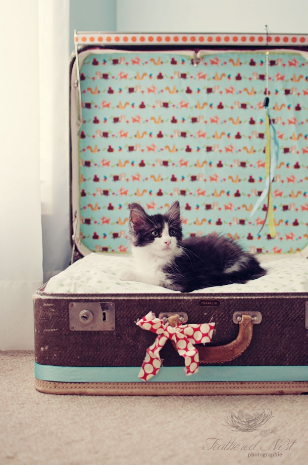 the MomTog diaries: Vintage Suitcase Turned Kitty Bed...Easy DIY (no sew!) AWWWW