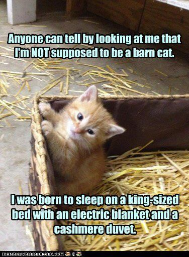 fa7639002bffe2908c5462c9fa858c3e animal humour funny animal 15 best barn cat's images on pinterest children, animals and,Funny Barn Memes