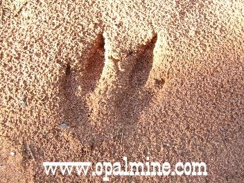 opal-fields-humor - something with four toes has just been here