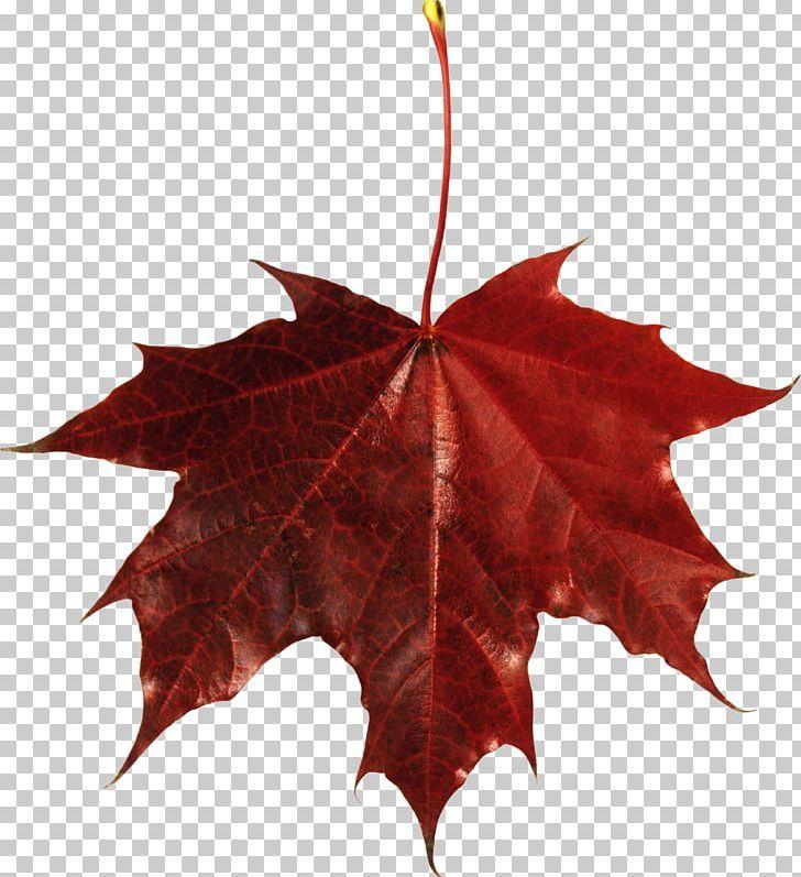 Autumn Leaves Png Autumn Leaves Autumn Leaves Art Background Autumn