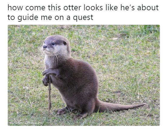 otter looks like he's about to guide me on a quest