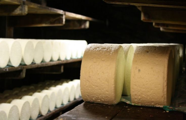 Image result for Roquefort Papillon cheese factory
